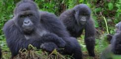 Rwanda-safari-6days