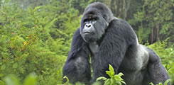5-day-safari-with-3-gorilla-treks