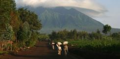 Rwanda-gorilla-tour-3days