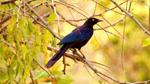 birding-rwanda