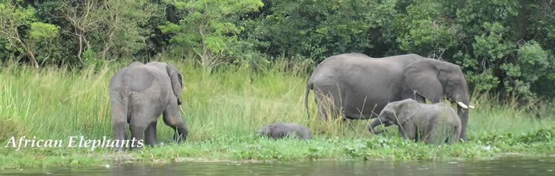 wildlife-safari