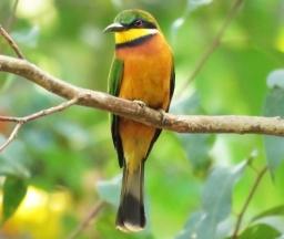 Top Birding Spots in Rwanda