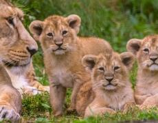 Akagera National Park Rates